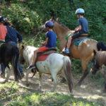 Accueil de loisirs 3CMA activité équitation